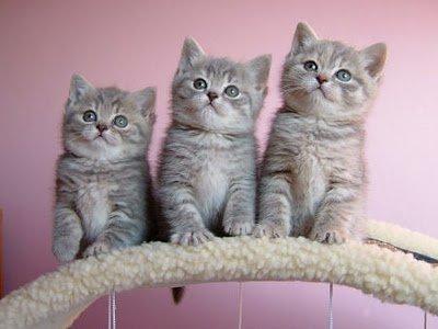 cute-little-kittens.jpeg